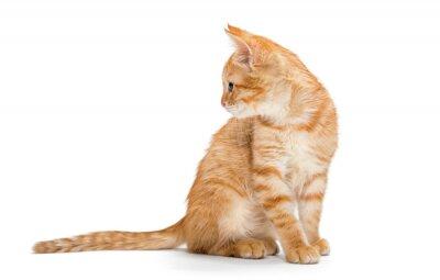 Póster Naranja, rayado, pequeño gatito