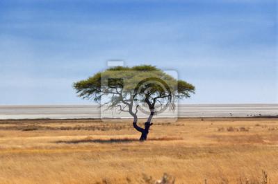 Naturaleza africana y reserva de vida silvestre, cacerola de Etosha, Namibia