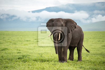 Ngorongoro elefante - Tanzania