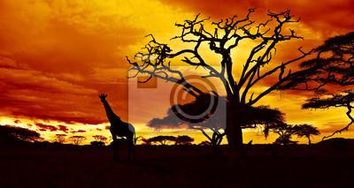 Noche africana