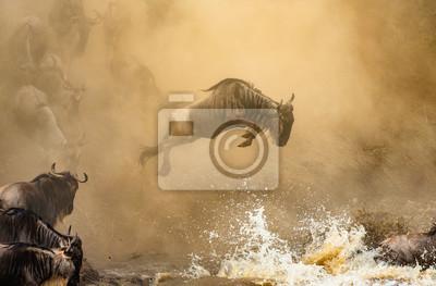 Ñu está saltando al río Mara. Gran migración. Kenia. Tanzania. Parque Nacional Maasai Mara.