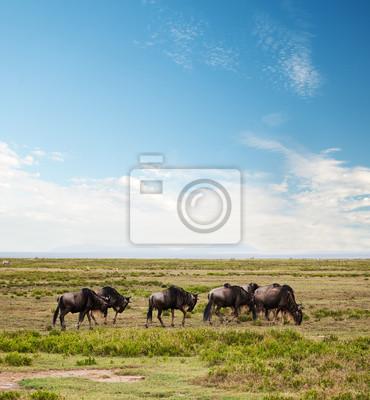 Ñu, Gnu en la sabana africana. Safari en el Serengeti
