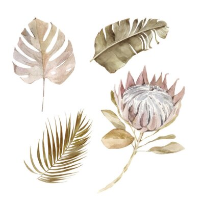 Póster Old dry swirling tropical leaves and flower watercolor vector illustration isolated on the white background. Closeup view palm leaf in boho style. Hand drawn leaves and protea in sepia color scheme.
