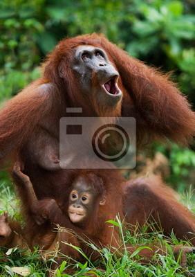 Orangután hembra con un bebé