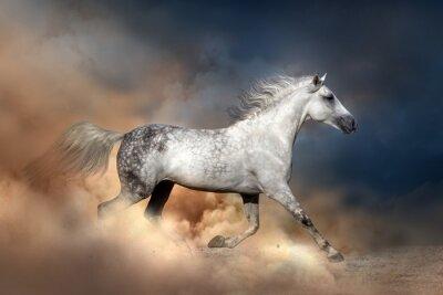 Póster Orlov caballo corriendo en polvo