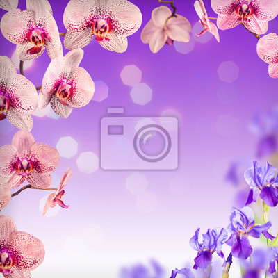 Orquídea flores de fondo