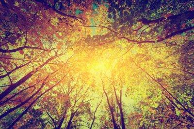 Póster Otoño, caída de árboles. Sol brillando a través de hojas de colores. Vendimia