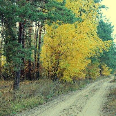 Póster País carretera en un hermoso bosque de otoño
