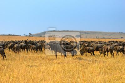 Paisaje africano con antílopes gnu