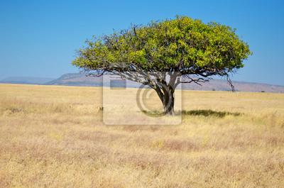 Paisaje africano del prado de la sabana, árbol del acacia en sabana en África