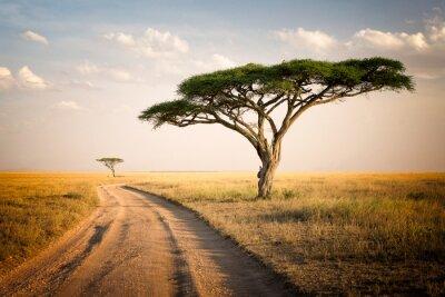 Paisaje africano - Tanzania