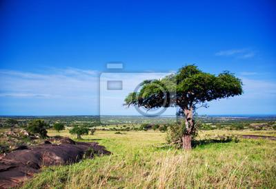 Paisaje de la sabana en África, Serengeti, Tanzania