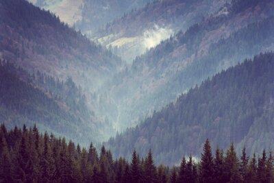 Póster Paisaje de las colinas del bosque de la montaña.