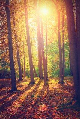 Póster Paisaje de otoño