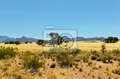 Paisaje de sabana africana, Namibia, África del Sur