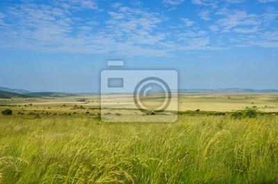 Paisaje de sabana africana, Parque Nacional Masai Mara, Kenia, África