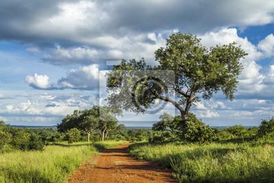 Paisaje de Savannah en el Parque Nacional Kruger, Sudáfrica