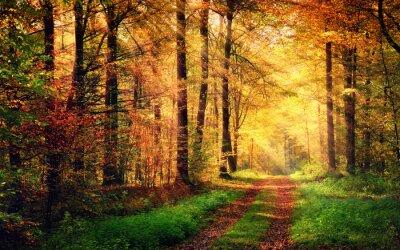 Póster Paisaje del bosque del otoño con los rayos de luz cálida