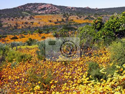 Paisaje en el parque nacional namaqualand, República de Sudáfrica