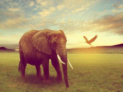 Póster Paisaje incluyendo un elefante africa
