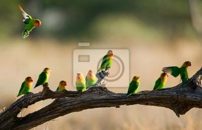 Pájaro brillante en una rama.