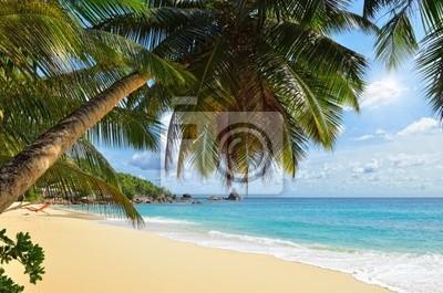 Palma sobre la playa tropical