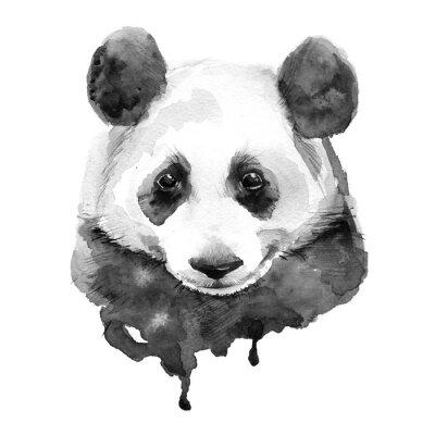 Póster Panda.Black y blanco. Aislado