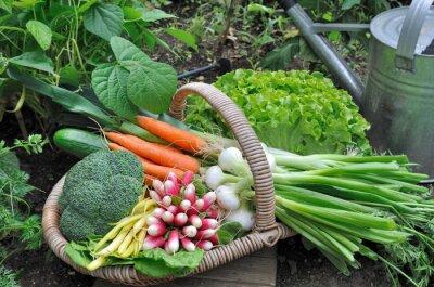 Póster panier de légumes frais dans potager