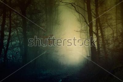 Póster Papel tapiz místico bosque oscuro
