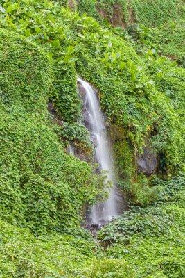 Póster Paroi humide et verdoyante, Anse des Cascades, Isla de la Reunión
