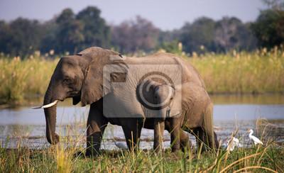 Parque Nacional del Bajo Zambeze. Río zambeze Una excelente ilustración.