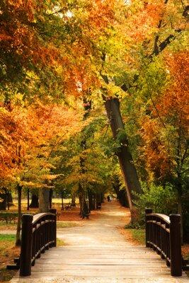 Póster Pasarela parque del otoño