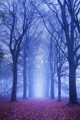Póster Path in a dark and foggy forest in The Netherlands