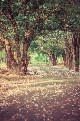 Póster Path under the tree-tunnel with flowers in vintage atmosphere