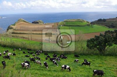 Paysage de Açores