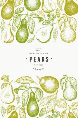 Póster Pear design template. Hand drawn vector garden fruit illustration. Engraved style garden fruit frame. Retro botanical banner.