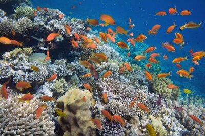 Póster Peces tropicales en los arrecifes de coral