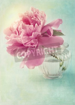 Póster Peony flower in a vase