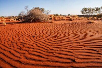 Póster Pequeñas plantas en el desierto de Australia Occidental