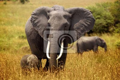 pequeño elefante sigue a la madre en las llanuras de Masai Mara