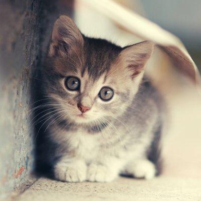 Póster Pequeño lindo gatito ubicación al aire libre