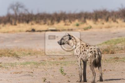 Perfil de la hiena manchada joven
