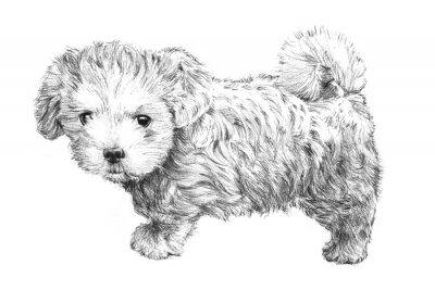 Póster perro dibujado a mano perrito imagen en blanco y negro, dibujo adorable cachorro de perro aislado en el fondo blanco para el veterinario, salón de preparación del animal doméstico, cuidado de mascotas