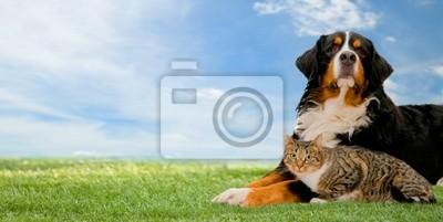 Perro y gato amigos juntos en la hierba