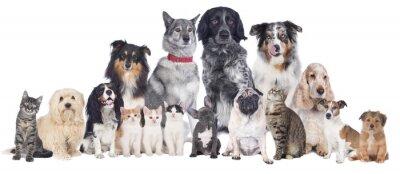 Póster Perros y gatos Grupo