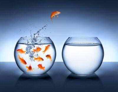 Póster pez de colores saltando - mejora y carrera concepto