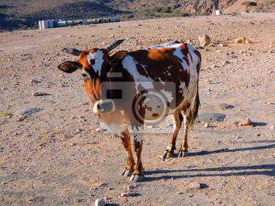 pigmeo vaca cercana Salalah - Sultanato de Omán
