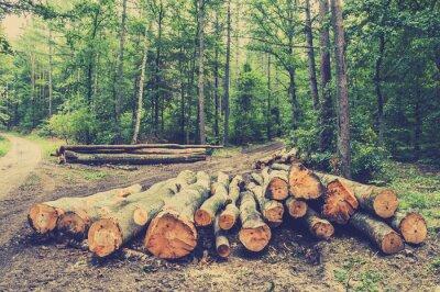 Póster Pila de madera en el bosque por el camino, foto de época.