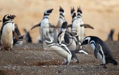 Pingüino de Magallanes de llorar en voz alta con sus alas para arriba