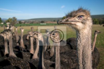 Pista de la avestruz